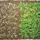La Brújula de la Ciencia s08e11: Plantas resistentes a las sequías