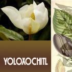 EL ÁNGEL DE TU SALUD- Rodrigo Mondragón - YOLOXOCHITL