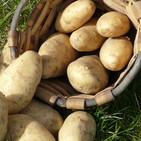 Atlas Etnográfico de Vasconia: Cultivo y aprovechamiento de la patata