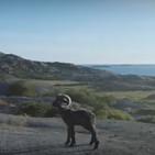 El nuevo anuncio de Volkswagen lo protagoniza un carnero confiado