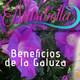 Nutribella - BENEFICIOS DE LA GALUZA