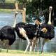 Actividades del Zoológico Nacional de Cuba como cierre del verano
