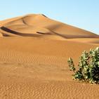 Biología sintética y Big Data contra la desertificación. El gran muro de árboles de África y el informe de la OMS