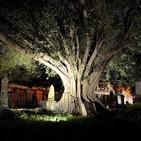 El árbol del vampiro - Leyenda de guadalajara