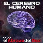 El Abrazo del Oso - El Cerebro Humano