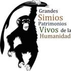 """Mágica Vida 159. """"Salvar las Selvas tropicales y grandes Simios"""" P. Pozas./ Ramiro Calle """"Yoga, una Medicina Natural"""""""