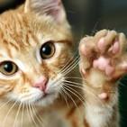 ¿Puede un gato firmar un artículo científico? con Francis Villatoro lCdlMF-NAUKAS. Prog,294. LFDLC