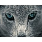 """""""Los Gatos de Ulthar"""" de H.P. Lovecraft"""