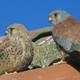 Alerta Ornitológica