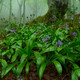 La luciérnaga 15-04-20 Biodiversidad y coronavirus