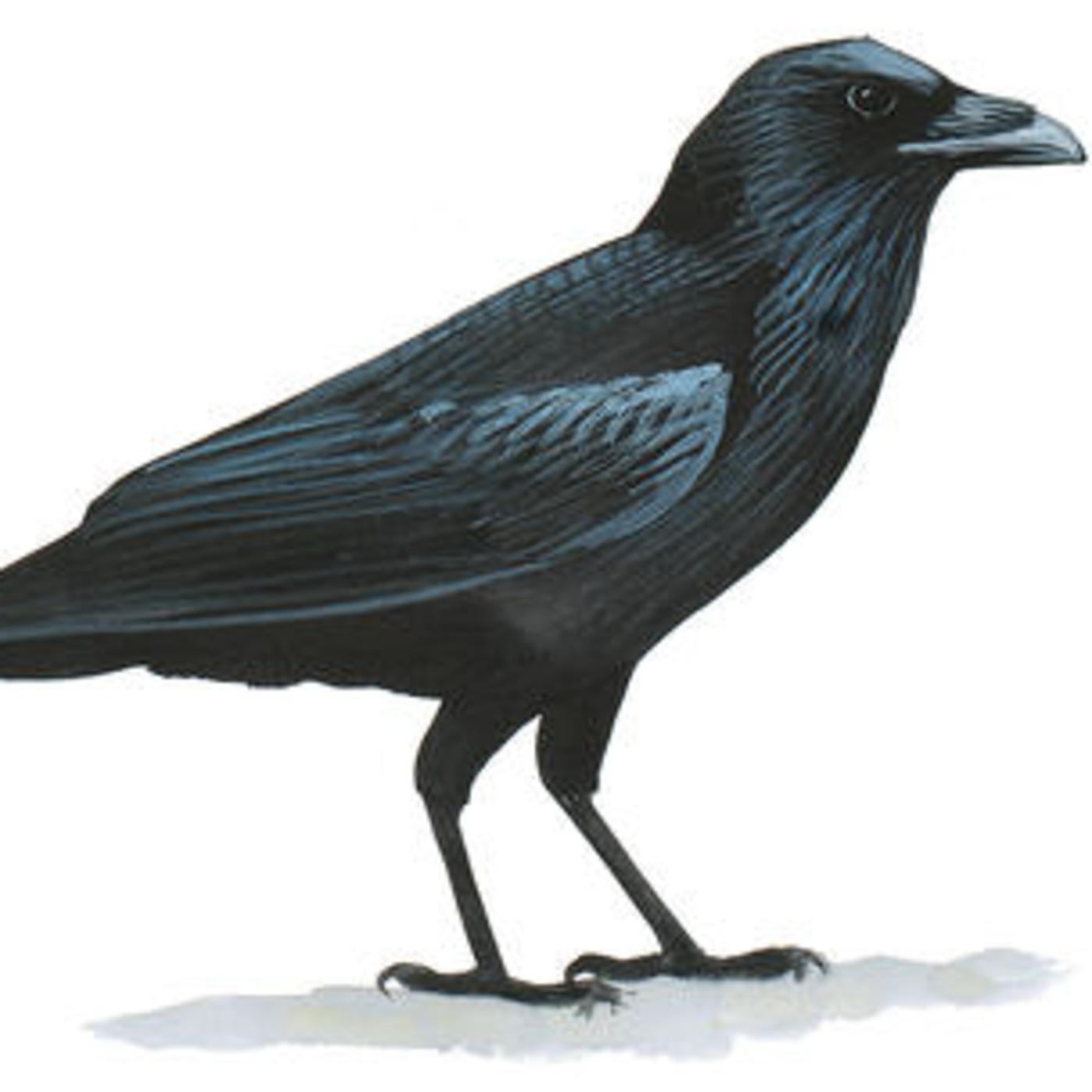 5x23 El cuervo, ave misteriosa