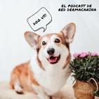 Epi 4. ¿Podemos hacer el Camino de Santiago con perro? ¿Y viajar por Europa? Hablamos con Mercè Jiménez (Turismo Canino)
