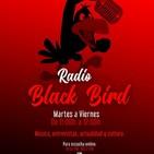 Radio Black Bird