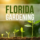 Florida Gardening- Back to the basics Part 1