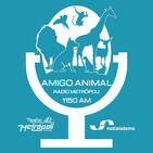 Amigo Animal - 6 de Abril de 2019