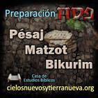 Preparación Pésaj, Matzot Bikurim