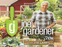 074-How to Have and Care for a Healthy Lawn: Top 7 Non-negotiables
