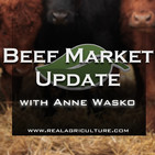Beef Market Update: Volatility, optimism, and the murky waters of what lies ahead for demand