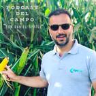 #RadioCampo - Estudian el potencial bioactivo de los pétalos de rosas