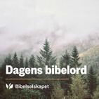 Dagens bibelord 17/11/19 – Matt 24,35-44