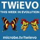 TWiEVO 53: Virus evolution by land and by sea and by CoV, part II
