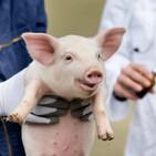 Smithfield veterinarian aims to connect dots on animal welfare
