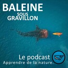 S02E12 Les secrets des cachalots 2/2, François Sarano (océanographe, plongeur)