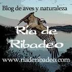 Ría de Ribadeo