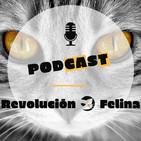 Revolución Felina