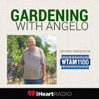 Lawn Tips -- Gardening With Angelo 5/23/20