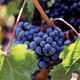 NEW EPISODE TONIGHT - Cellar Dwellers - Home Winemaking