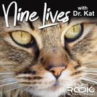 Nine Lives with Dr. Kat - Episode 52 Having a New Baby? Help Your Cat Adjust