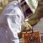 Cabada vazquez. proxecto abellas. infantil.5