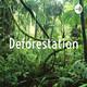 Deforestattion