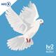 Das Kreuz mit dem rechten Rand - Wie sich die Kirchen gegen Fremdenfeindlichkeit abgrenzen