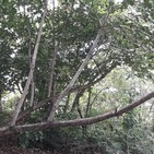 Impulsan programas de repoblación forestal en Cruc