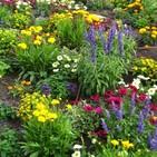 La Plaça - Flors i plantes