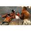 Boxeo y deportes de contacto