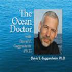 David Guggenheim PhD